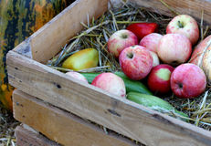 Ripe natural organic apples on wooden box Royalty Free Stock Photo