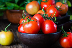 Ripe natural tomatoes with leaves in clay bowl Stock Photography
