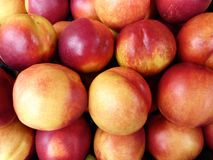 Ripe nectarines. Juicy shiny nectarines boxed up and ready to sell Royalty Free Stock Images