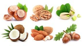 Ripe Nuts In Closeup
