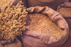 Ripe Oats and Sacks with Grain Royalty Free Stock Photo