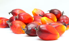 Ripe oil palm fruits Royalty Free Stock Photos