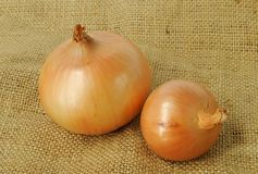 Ripe onion. Two ripe onions on canvas background. Closeup Royalty Free Stock Photo