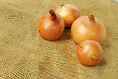 Ripe onion. Group of ripe onions on white background Royalty Free Stock Photography