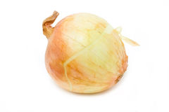 Ripe Onion. Royalty Free Stock Photos