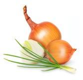 Ripe onion isolated Royalty Free Stock Photo