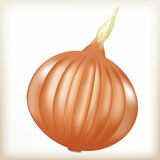 Ripe onion Stock Image
