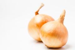 Ripe onion Royalty Free Stock Photo