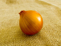 Ripe onion Royalty Free Stock Images