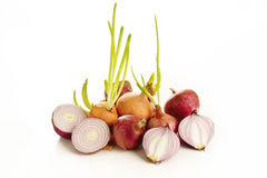 Ripe onion and sprout onion on  white Stock Photos