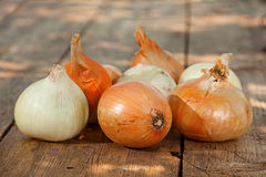 Ripe onion vegetable Royalty Free Stock Photography
