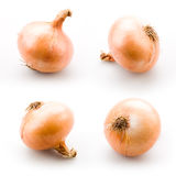 Ripe onion  on white Stock Images