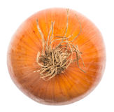 Ripe Onion Stock Photography