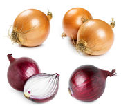 Ripe onion Royalty Free Stock Photography