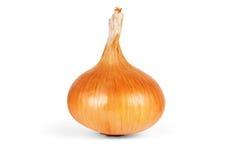Ripe onion on a white background Royalty Free Stock Photo