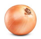 Ripe onion Royalty Free Stock Photos