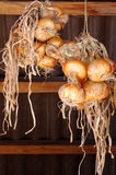 Ripe onions hanging Royalty Free Stock Photos
