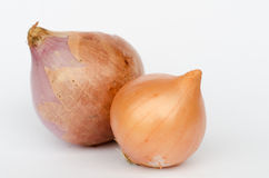 Ripe onions Royalty Free Stock Photography