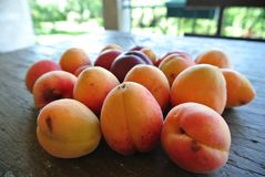 Ripe orange apricots on the rustic wooden table, on a sunny summer day. Stock Photos
