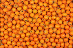 Ripe orange berries of mountain ash background Royalty Free Stock Photography