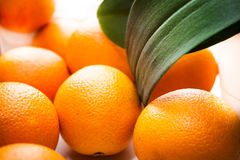 Ripe orange fruits background. With green plant leaves and back light. Selective focus on some oranges and leaves Royalty Free Stock Photo
