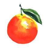 Ripe orange with leaf, watercolor illustration on white Stock Image