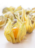 Ripe orange physalis Stock Image