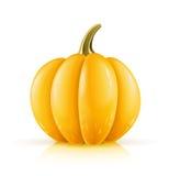 Ripe orange pumpkin Stock Photo
