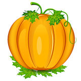 Ripe Orange Pumpkin Stock Photo