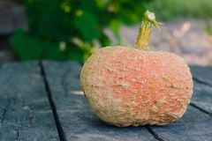 Ripe orange pumpkin on an old gray wooden table in the garden royalty free stock image