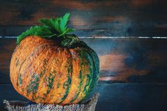 Ripe orange pumpkin rests on a wooden background in rustic style on wooden background. Stock Images