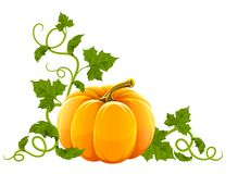 Ripe orange pumpkin vegetable Stock Images