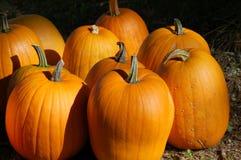Ripe orange pumpkins Stock Images