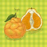 Ripe Orange Tangelo. With Leaf on a Green Plaid Background Stock Images