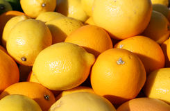 Ripe Orange and yellow lemons for sale Stock Photos
