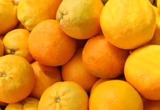 Ripe oranges Royalty Free Stock Photo