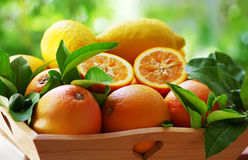 Ripe oranges group in a basket Stock Photos