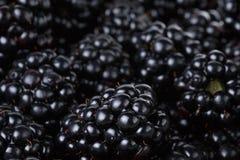 Ripe organic blackberries close up. Organic food background Royalty Free Stock Images
