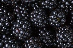 Ripe organic blackberries close up. Organic food background Stock Photos