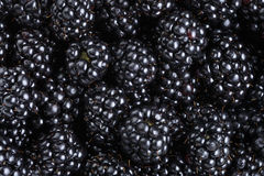 Ripe organic blackberries close up. Organic food background Stock Images