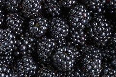 Ripe organic blackberries close up Stock Images