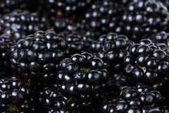 Ripe organic blackberries close up. Organic food background Royalty Free Stock Photo