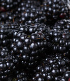 Ripe organic blackberries close up. Organic food background Royalty Free Stock Images