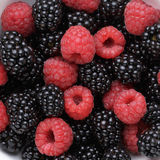 Ripe organic blackberries and raspberries Stock Photos