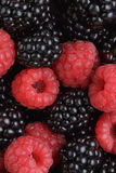Ripe organic blackberries and raspberries Stock Photography