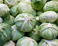 Ripe organic cabbage Royalty Free Stock Photo