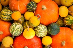 Ripe organic colored pumpkins Royalty Free Stock Photography