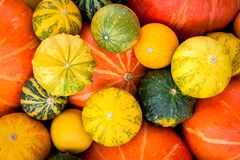 Ripe organic colored pumpkins Royalty Free Stock Images