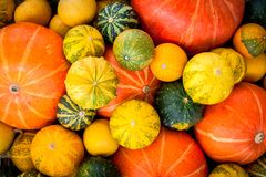 Ripe organic colored pumpkins Stock Images
