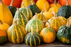 Ripe organic colored pumpkins Royalty Free Stock Image